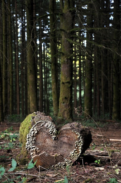 heart shaped log