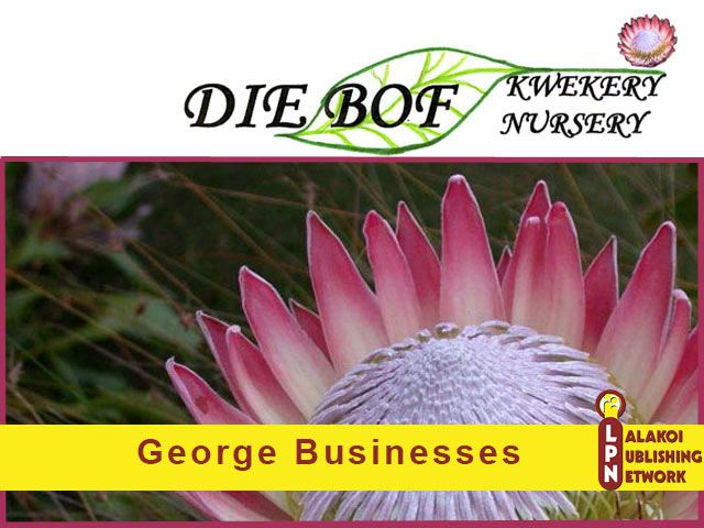 Nursery in George  Die Bof Kwekery is a nursery situated in Hansmoeskraal on the outskirts of George in the Southern Cape of South Africa.  They specialize in Fynbos but also offer a selection of other indigenous plants. Indigenous plants needs less water and offers you water saving gardening solution.  http://lalakoidirectory.com/die-bof-kwekery/  #diebofkwekery, #lalakoi, #lalakoipublishing, #nurseryingeorge,  #georgebusinesses