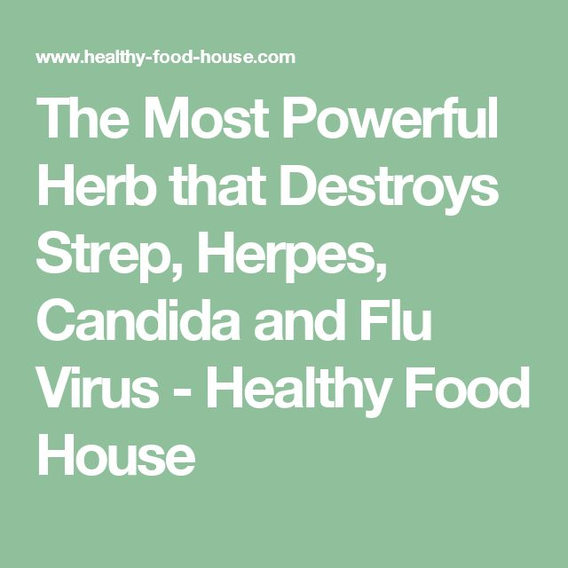 The Most Powerful Herb that Destroys Strep, Herpes, Candida and Flu Virus - Healthy Food House