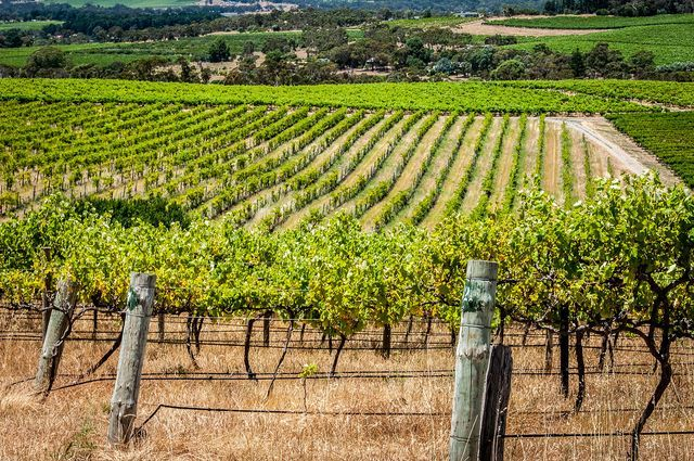 The d'Arenberg Vineyard in the McLaren Vale, South Australia. This winery produces wine form a range of alternative varietals
