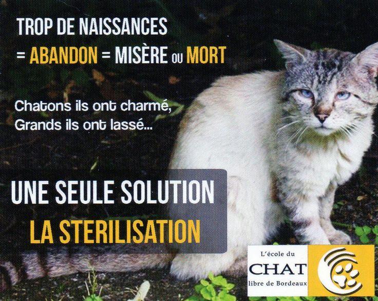 Cause animale : L'ECOLE DU CHAT LIBRE de Bordeaux : association dont la vocation est la stérilisation des chats errants et la mise à l'adoption de chats et chatons des rues. http://www.ecole-du-chat-bordeaux.com/