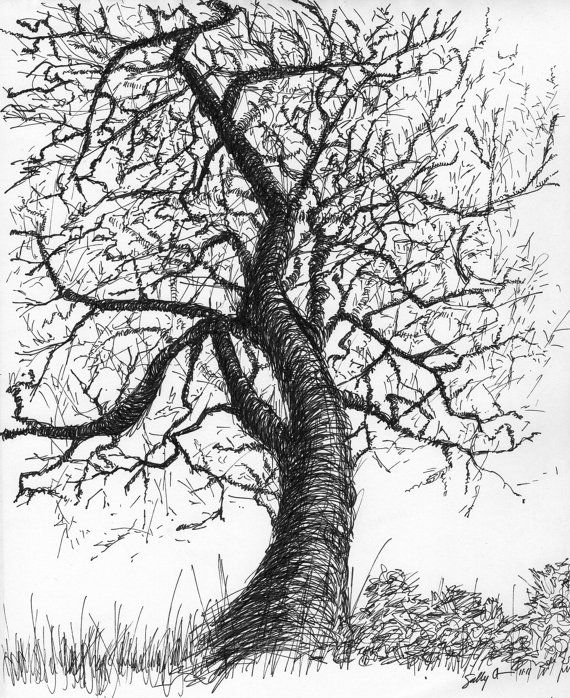 Black and white nature art print from pen & ink sketch ...