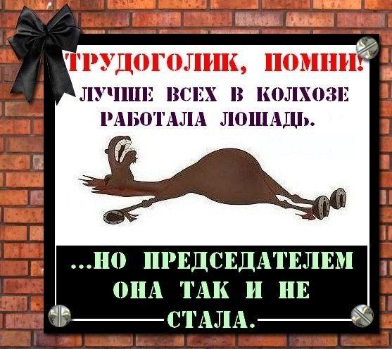 открытка про лошадь которая не стала председателем жигунов практически