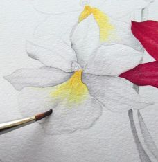 How to paint watercolour botanicals – part one - How To - Artists & Illustrators - Original art for sale direct from the artist