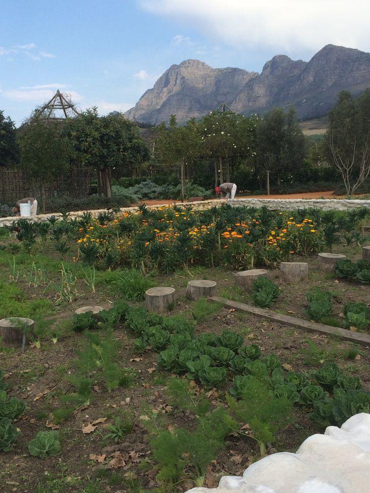 Moestuin | babylonstoren | South Africa