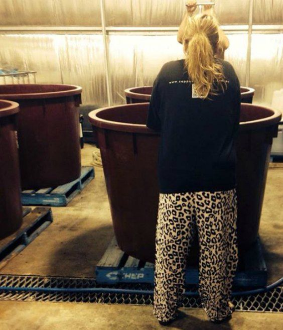 Donna Stephens plunging Shiraz in her PJs!!! That's how she rolls...