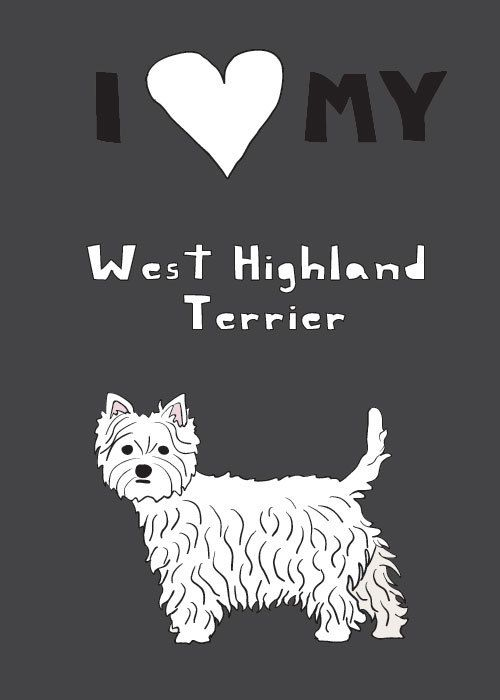 West Highland Terrier love