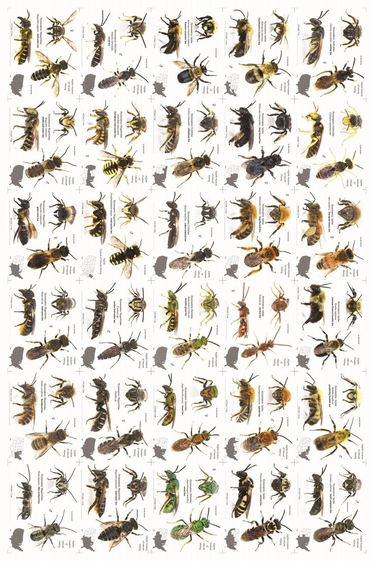 A bee poster! Get from  https://www.facebook.com/photo.php?fbid=359020760909407set=a.227039040774247.1073741825.227016960776455type=1theater