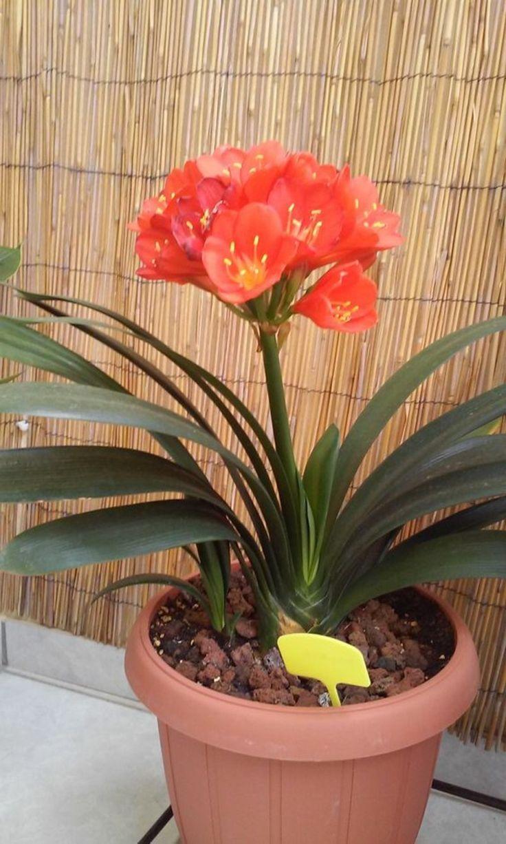 Poisonous Houseplants 20 Poisonous Plants That You Should Know Houseplants Plants Poisonous Should Poisonous Plants Plants Indoor Plants