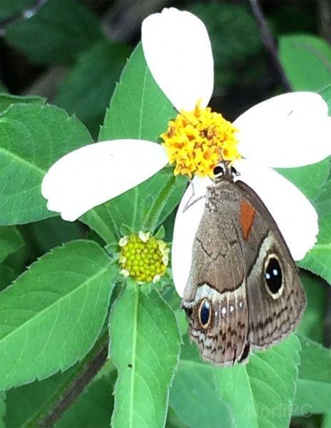 Fondo de pantalla para un tablet de una mariposa en la flor de romerillo