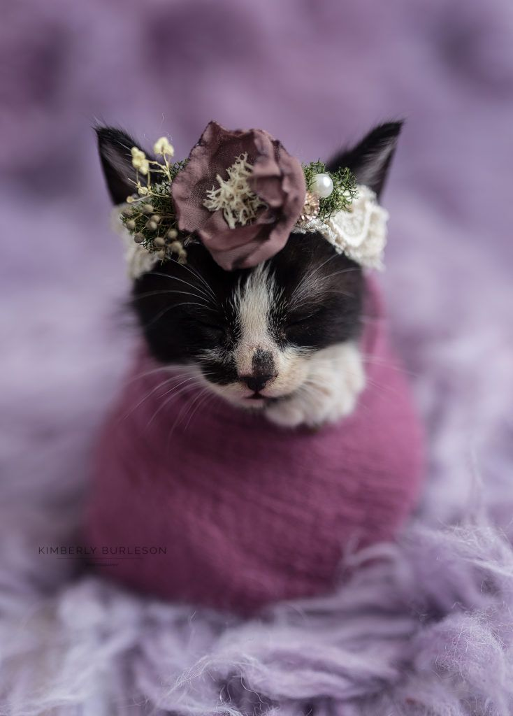 newborn kitten photoshoot