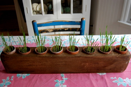 super cute.Grass Decor, Kitchen Herbs, Seedlings Herbs, Kitchens Herbs