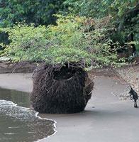 La vegetación crece profusamente a lo largo de la costa, aprovechando cualquier sitio para desarrollarse.