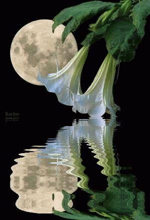 espejo de luna llena