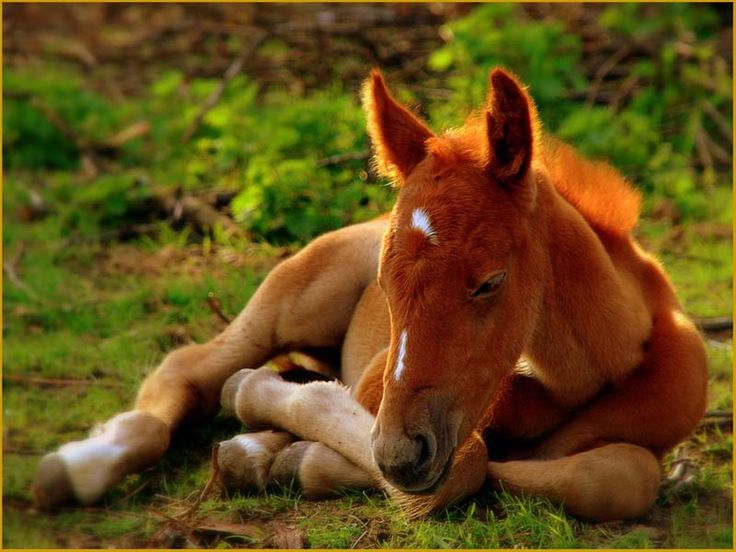 Baby: Baby Horses, Animal Baby, The Farms, Hors Pictures, Baby Learning, Baby Animal, Farms Yards, Hors Photos, Wild Hors