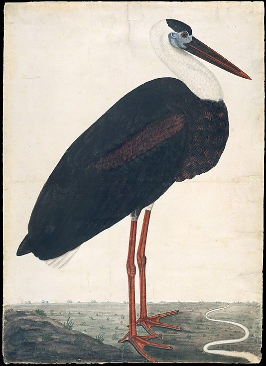 Black Stork in a Landscape, India, probably Lucknow, 1780