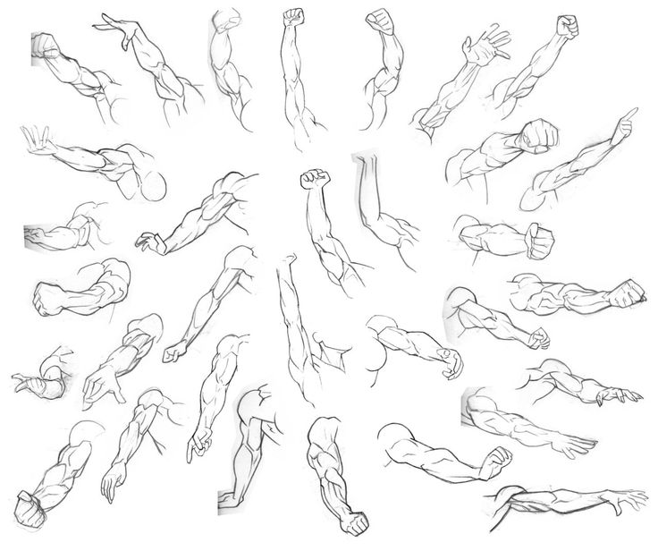 Pinterest • The world's catalog of ideas Arm Muscles Drawing