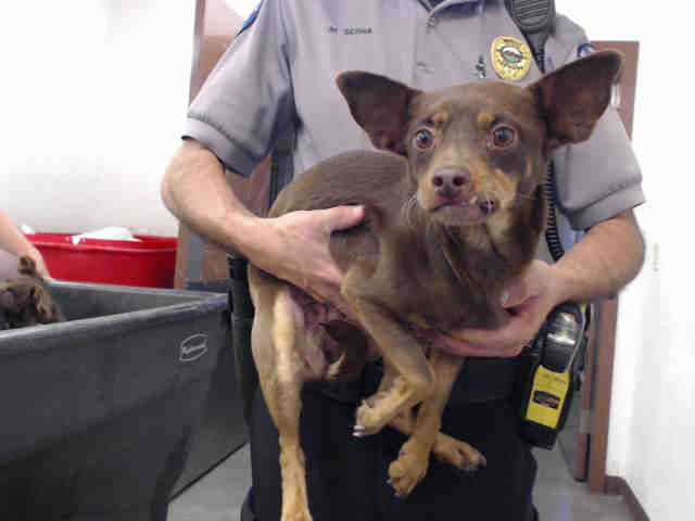 High Kill Shelter Urgent Dog Petharbor Com Animal Shelter Adopt A Pet Dogs Cats Puppies Kittens Humane Society S Animal Shelter Animals Humane Society