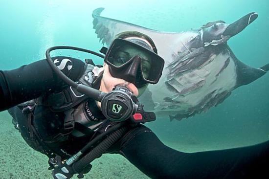A hölgyek és a tengerbiológia - Big Blue Búvár Blog
