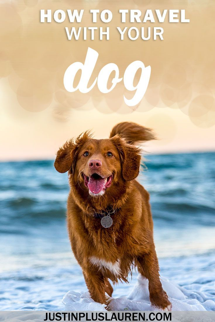 How To Travel With A Dog The Ultimate Guide To Travelling Abroad