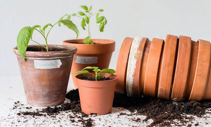 Odlingsskola: Så skapar du en trädgård hemma