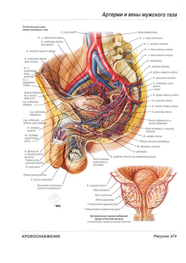 280 best Medical images on Pinterest | Nursing, Medical science and ...
