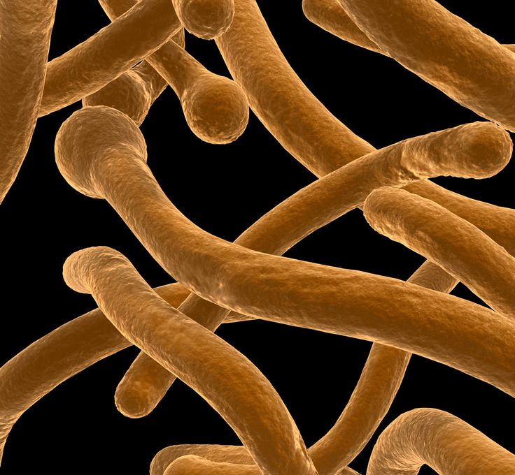 How to Cure Candida
