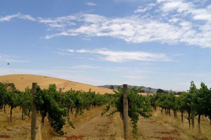 Eastern Peake Winery