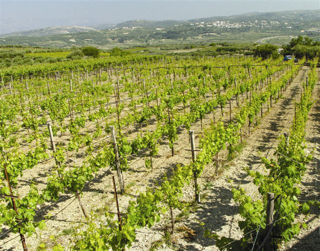 Today let' s visit Winery Stilianou @ Kounavi, Municipality of Archanes-Asterousia,70100 Heraklion, Crete, Greece T: +306936430368 The winery's page @ our website: http://bit.ly/1vL0Oen