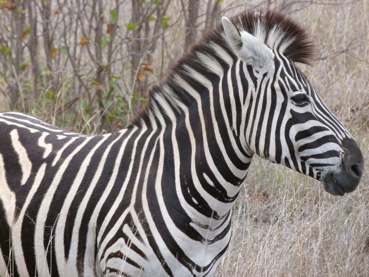 #southafrica #holiday #travel #kruger #safari