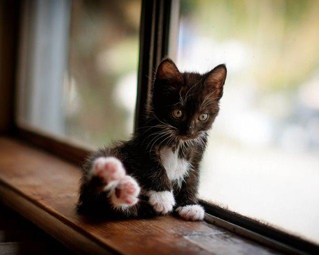 Meow : )