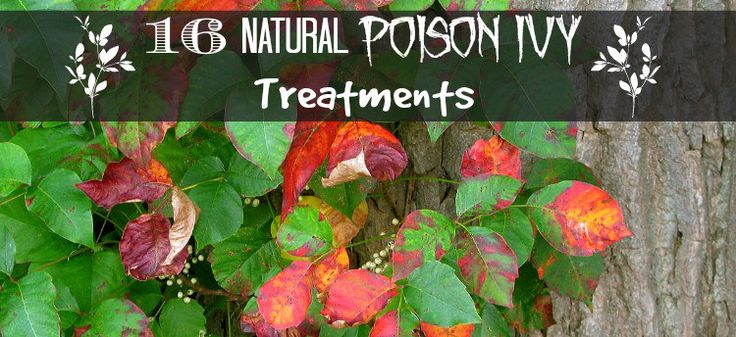 All Natural Way To Get Rid Of Poison Ivy