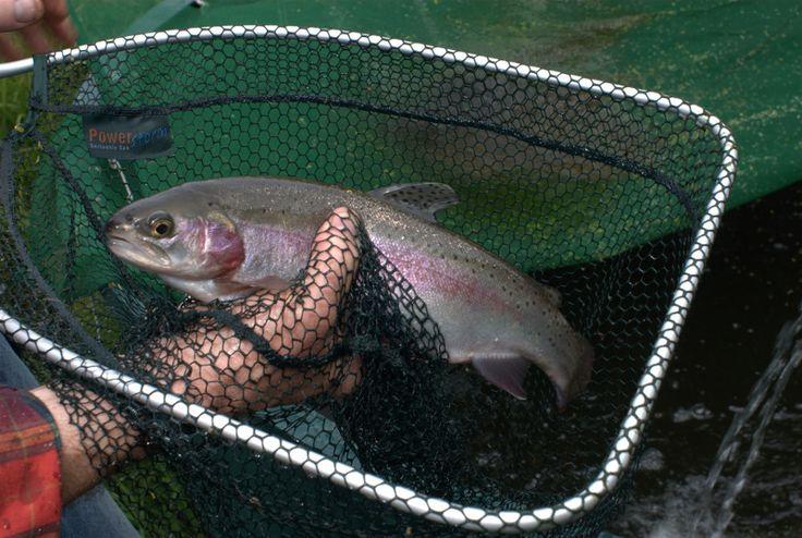 64 best fish farming aquaponics images on pinterest for Catfish aquaponics