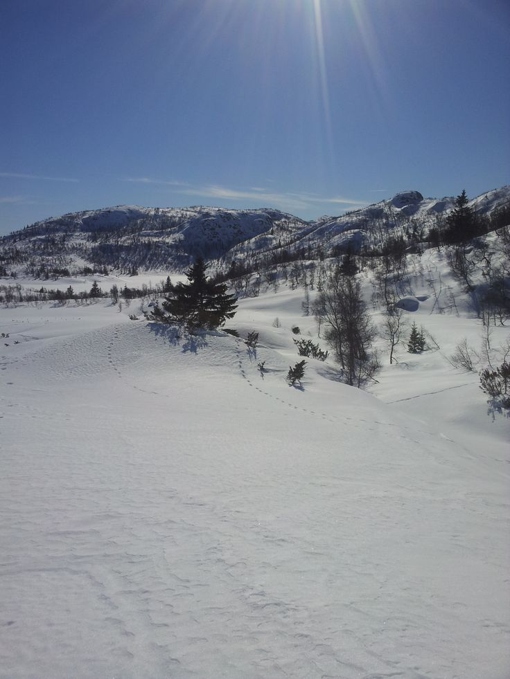 The scenery skiing in to our Fagerdalen (hunting cabin) property is peaceful and picturesque!