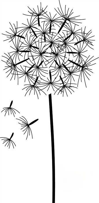 Dandelion Drawing Dessin Pour Pinterest