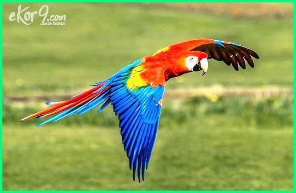10 Jenis Burung Macaw Beserta Gambar Dan Harganya Hewan