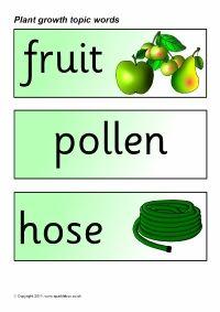Plant growth topic word cards (SB83) - SparkleBox