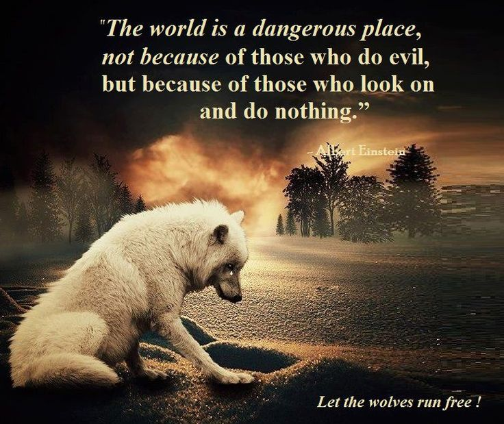 Most Beautiful Places In The World Quotes: Silent The World Is A Dangerous Place, Not Beause Of