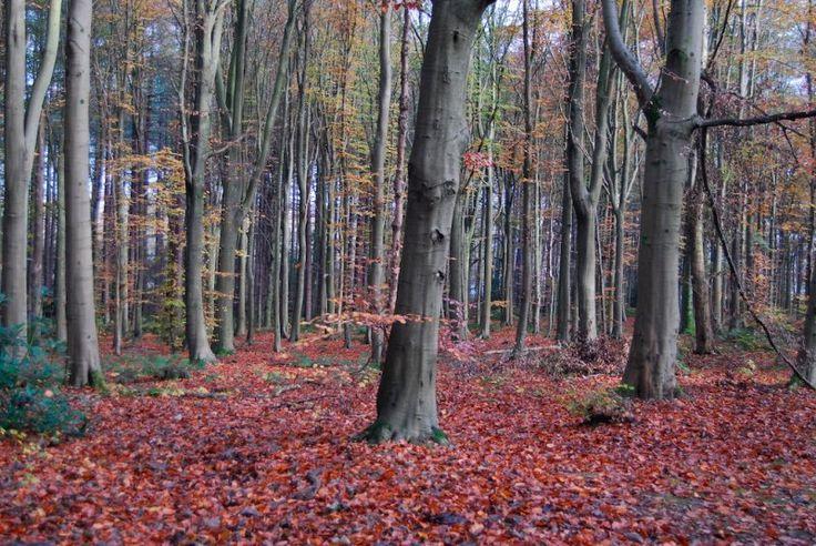 Beautiful Scotland, Pollok Park photo - NeilG photos at pbase.com