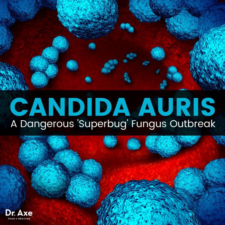 Dangers of a Deadly Fungus: The Candida auris Superbug
