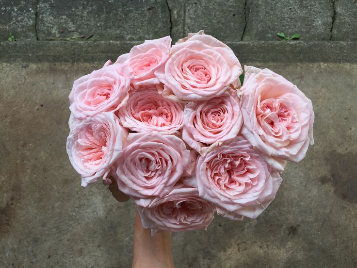 TFC Flowers - Pink Cottage Roses