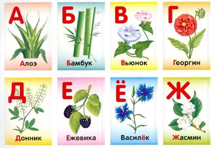 названия садовых с картинками по алфавиту купить