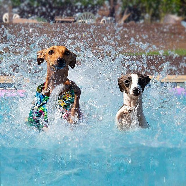 The Dog Friendly Life In Nyc Poolside Rooftop Gansevoort Hotel Group Dog Friends Dogs Therapy Dogs