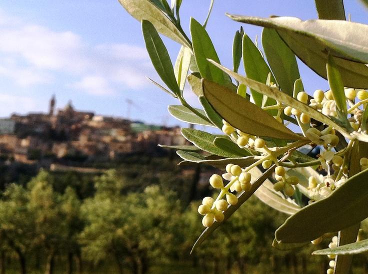 Trevi PG Umbria Italy