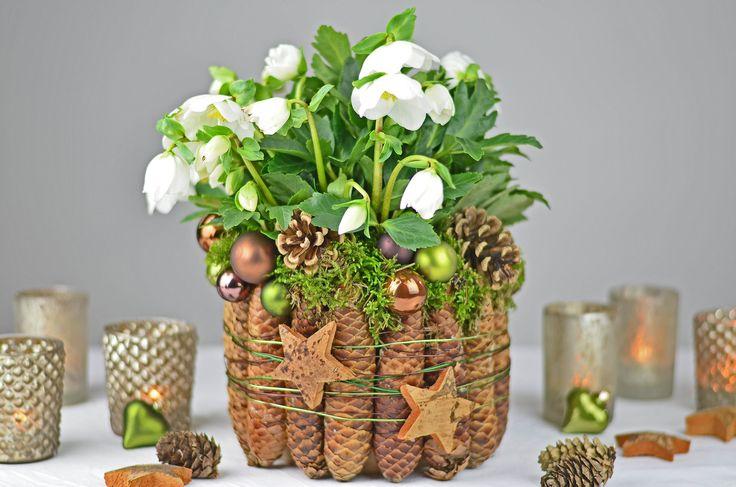 In der Weihnachts- und Winterdeko sind Pflanzen mit weißen Blüten meine Dekolieblingen. Mit Fichtenzapfen, kleinen Weihnachtskugeln und Moos könnt ihr daraus...