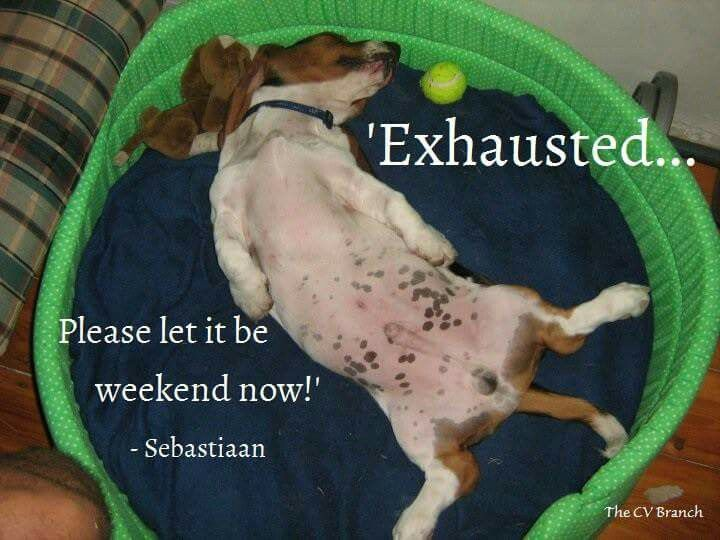 Have a sensational weekend! #TheCVBranch #FridayBasset