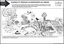 chaînes et réseaux alimentaires au jardin