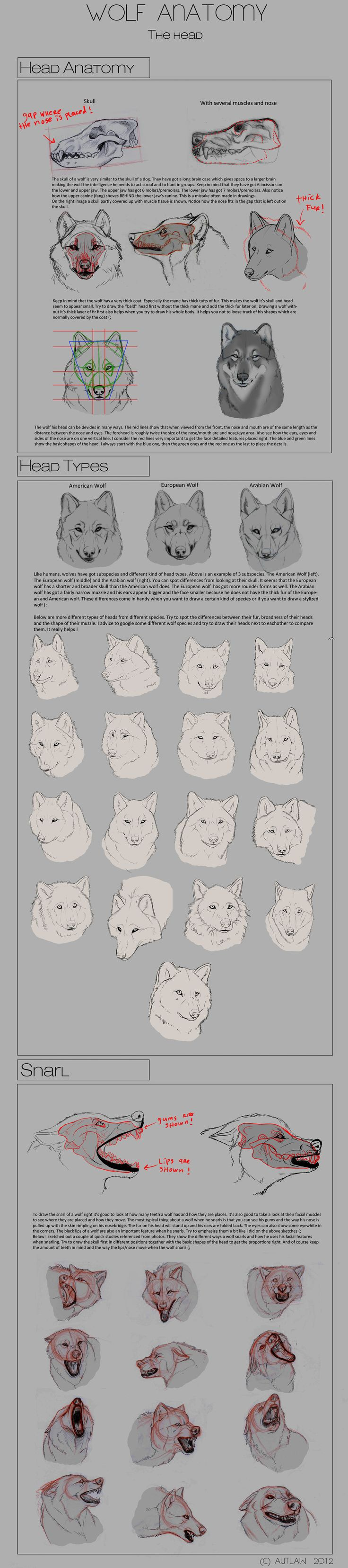Wolf Anatomy - Part 3 by *Autlaw on deviantART || CHARACTER DESIGN REFERENCES | Find more at https://www.facebook.com/CharacterDesignReferences