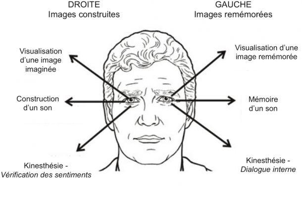 Peut-on détecter le mensonge par le regard ?    Programmation Neuro-Linguistique (PNL) et synergologie : la théorie des 4 quadrants.