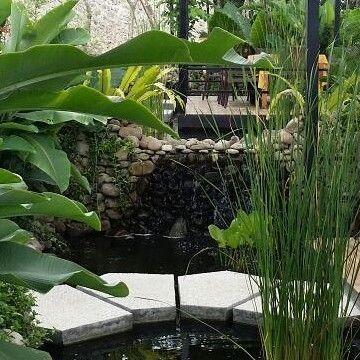 New pond project at Bukit Randu Hotel Banda Lampung Sumatra. 4 waterfalls 8 dining pavilions and 65 meters long. Natural stone filter system.  By Bali Landscape Company  http://ift.tt/1QzTwns  #sumatra #hotelbukitrandu #bukitrandu #pond #waterfeature #waterfalls  #landscape #landscapedesigner #landscapearchitecture #gardenlovers #taman #tropicaldesign #tropicallandscape  #landscape #landscapecontractor  #gardenideas #gardenlovers  #tropicallandscape  #landscapearchitect #garden #gardenideas…